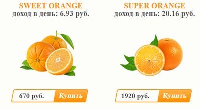 Игра без кэш поинтов Orange Juice
